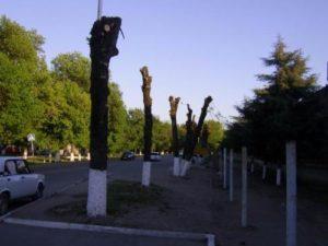 кронирование деревьев в санкт-петербурге