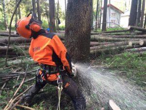 валка деревьев целиком в санкт-петербурге