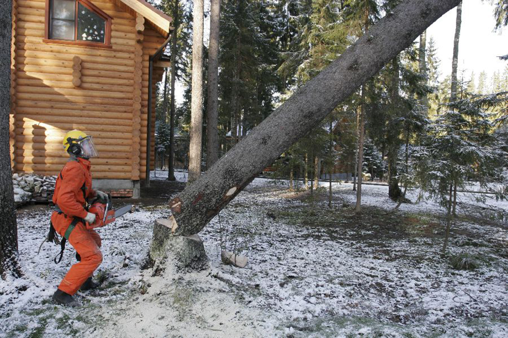 Валка деревьев целиком