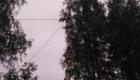 Валка деревьев с оттяжкой