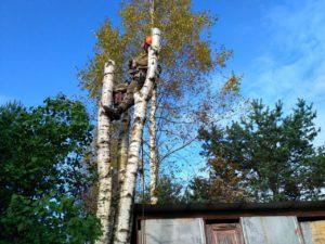 Спилить дерево в Сестрорецке